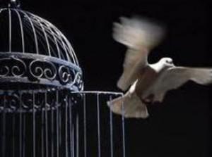 قانون-آزادی-مشروط-زندان